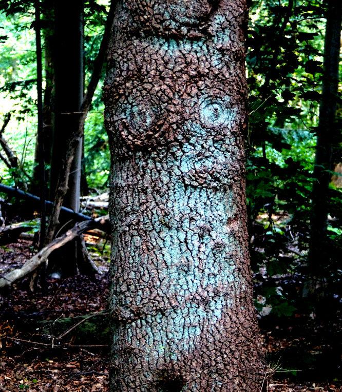 De bomentempel van Tanfana